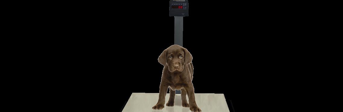 Balança Plataforma Aço Carbono PET ABS, Clínica Veterinária